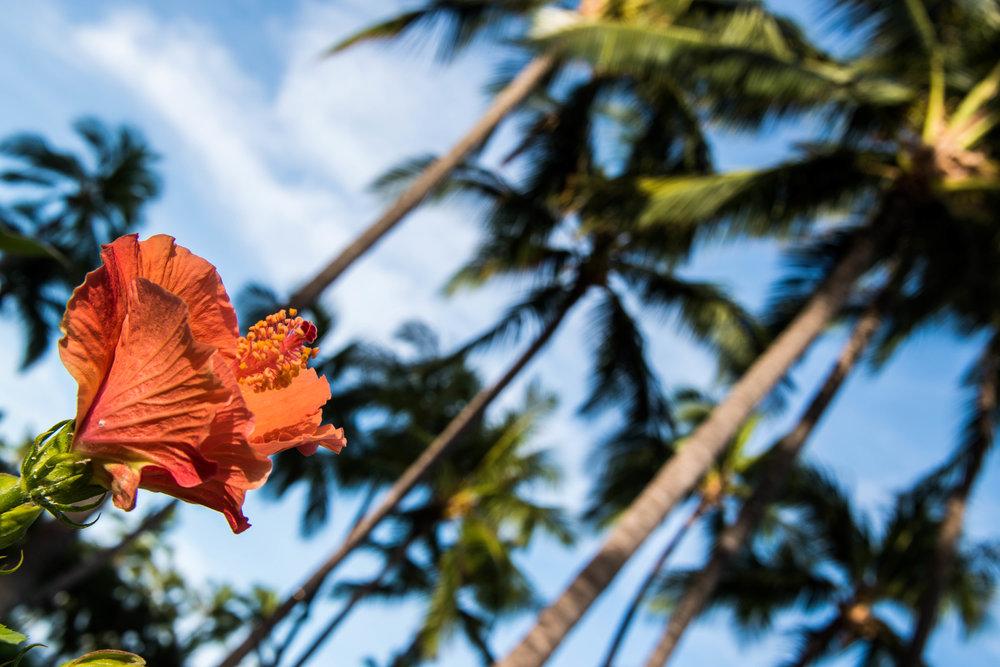 Oahu2016-0082.jpg