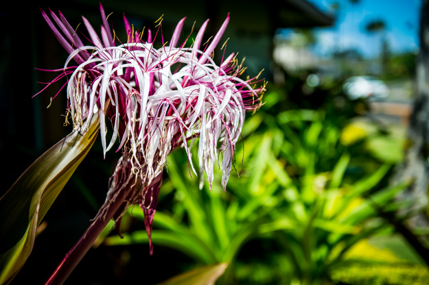 FloralKauaiMemories2012-1.jpg