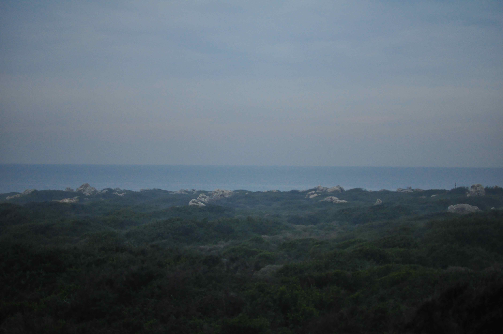 Fog, Moss, Sea.jpg