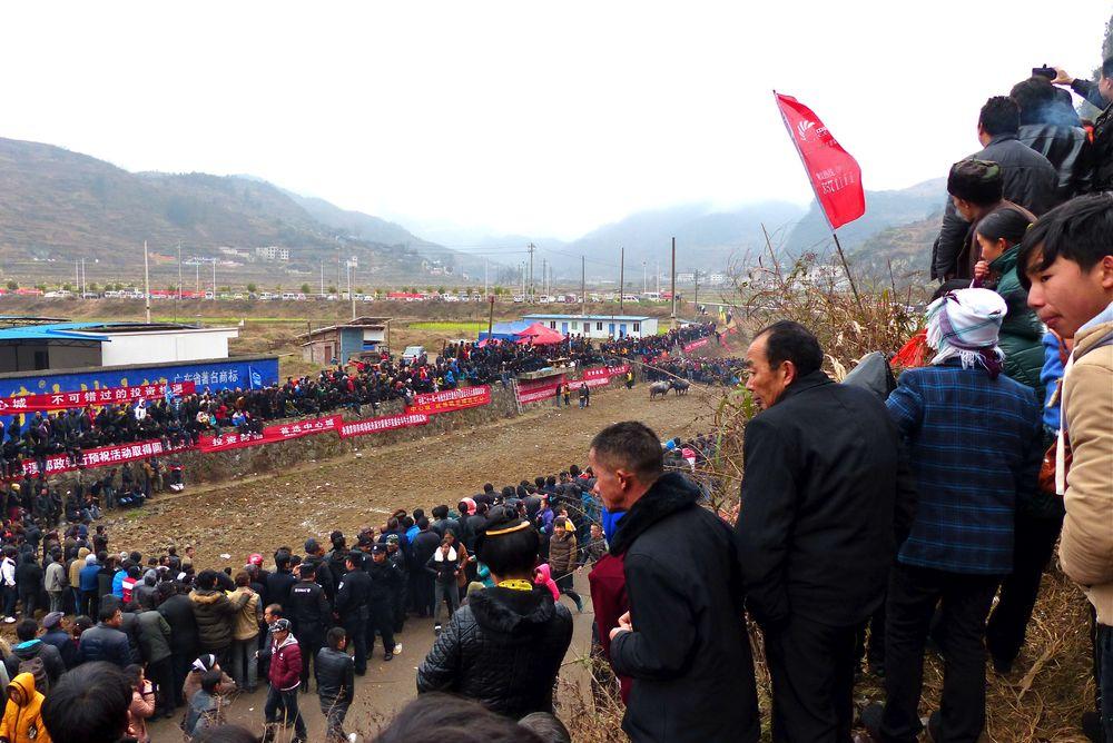 bullfightringzhouxi