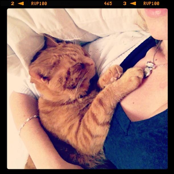 He's snoring. #fatgingercat #bill