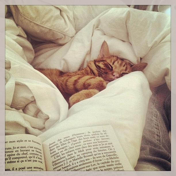 #weekends (à Studio French Blue )  #orangecat