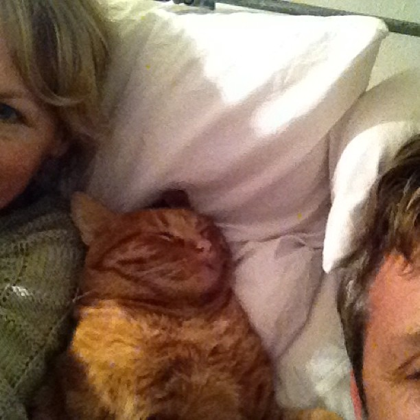 Bill is taking up all the room. #orangecat #gingercat