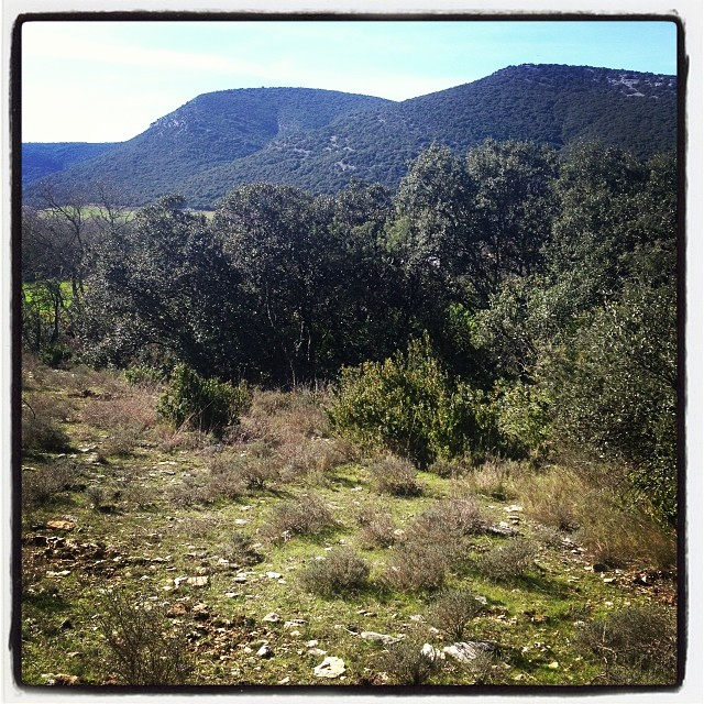 Walking meditation after breakfast, then then a day of lettering. #southoffrance #france #vipassana (à Quissac)