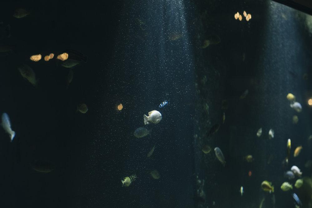 New wedding venue at Toledo Zoo with huge fish tank.