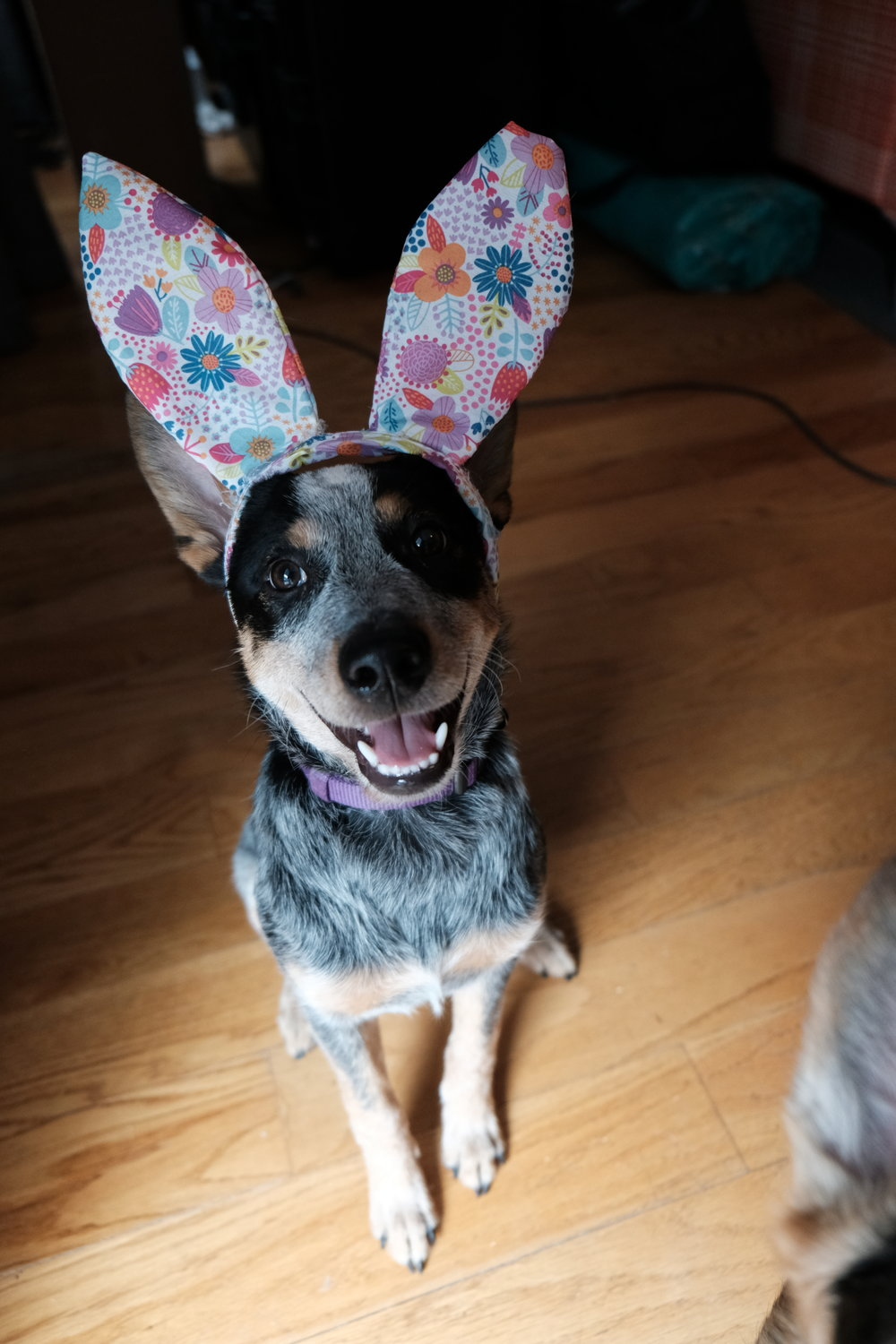 Easter_Dog_Pictures