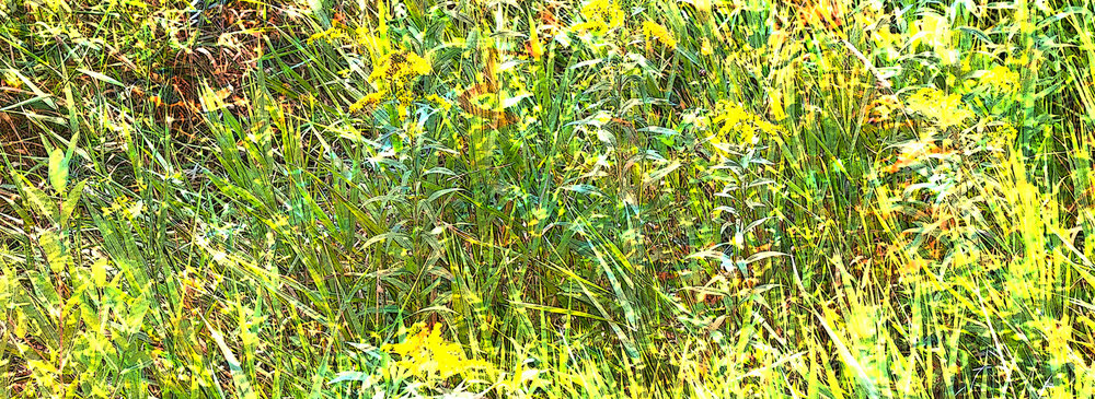 Madison - Meadow Grass