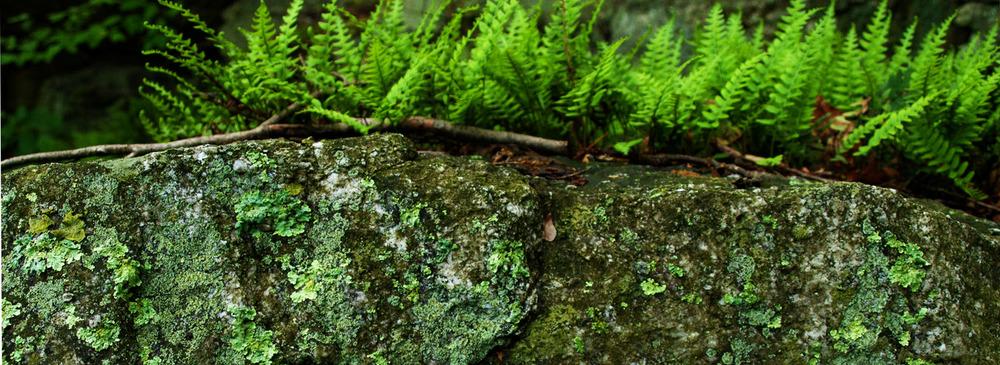 Mohonk - Lichen