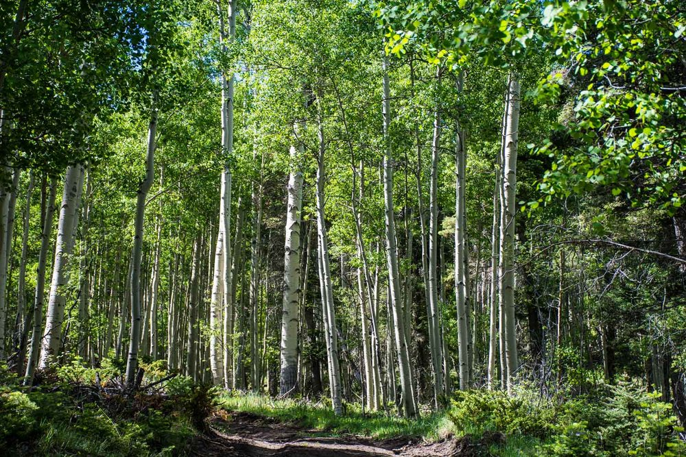 2018-05-29_Newmexico_4862-forest.jpg