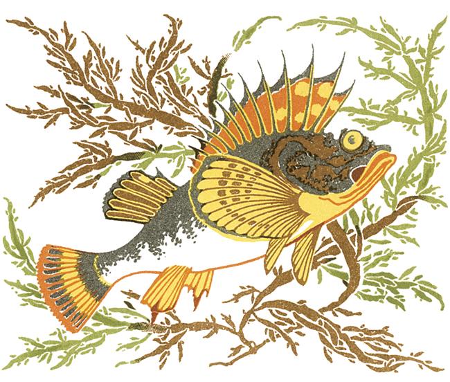 Fish-A-N.jpg