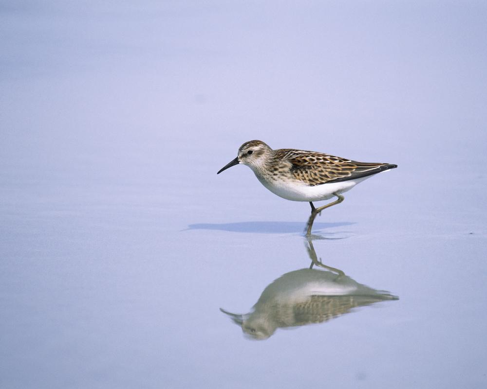 shorebird.jpg