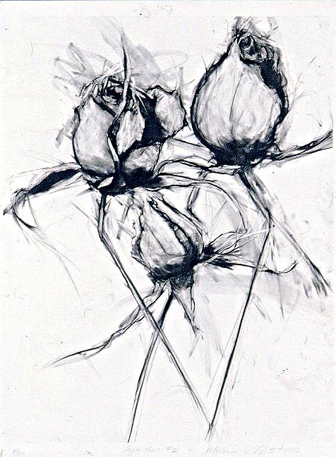 Black & White Roses #3