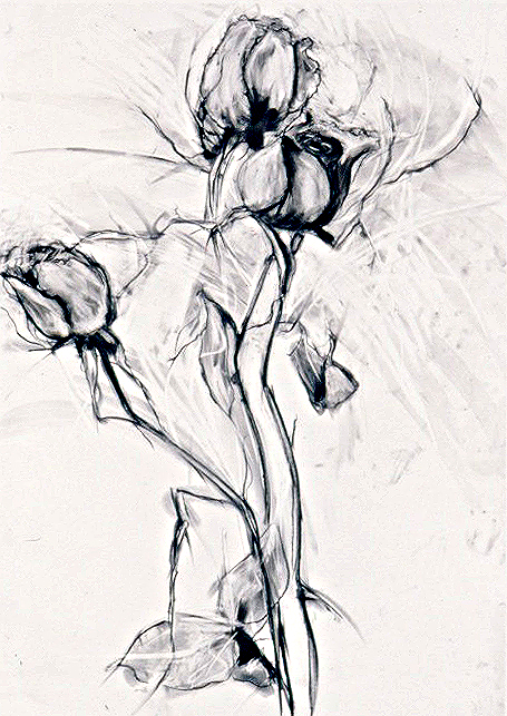 Black & White Roses # 5