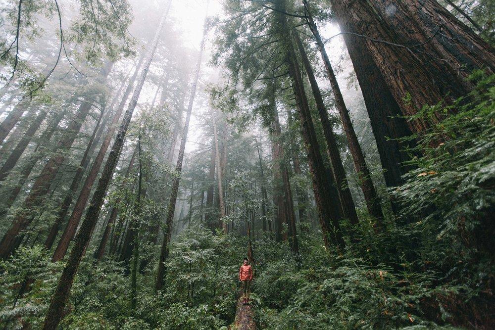 matt_redwoods_lowres-4144.jpg
