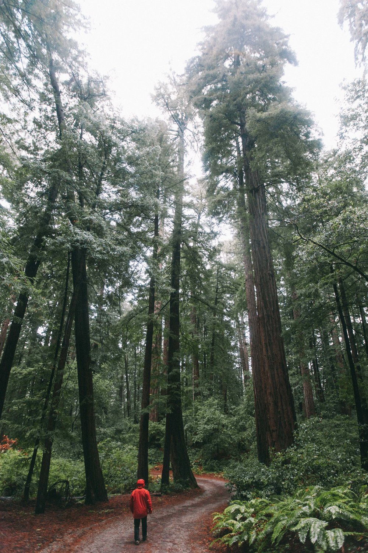 mattias_redwoods-4020.jpg