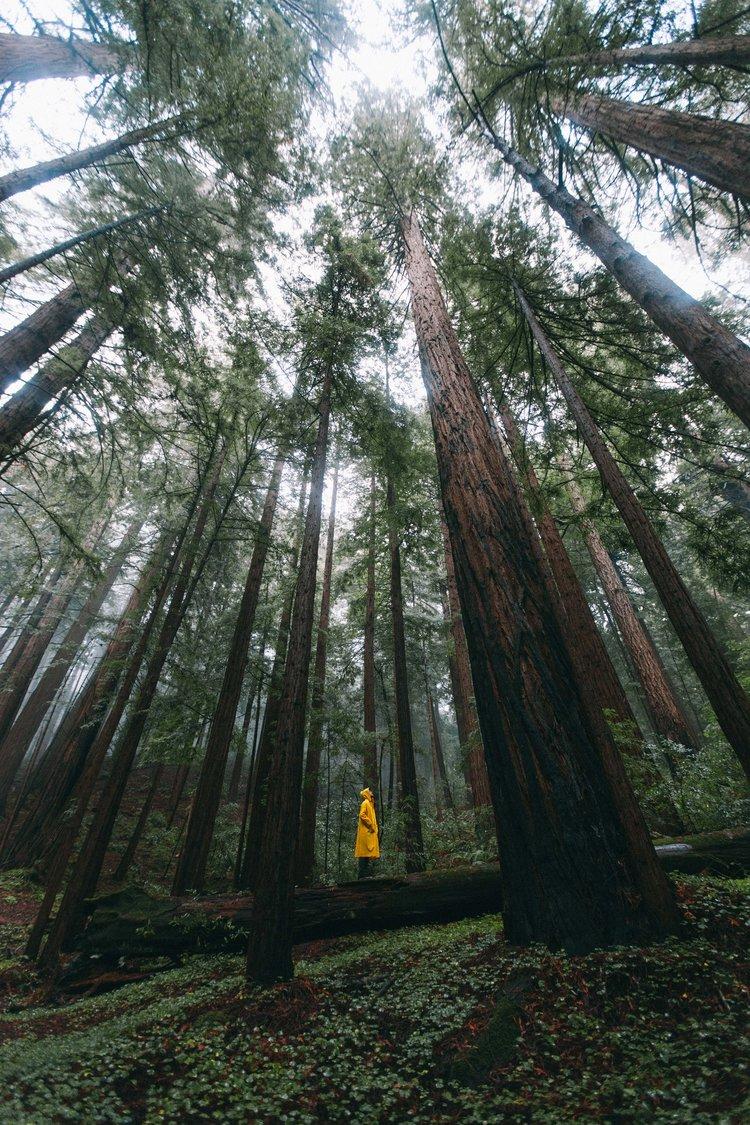 jensen_redwoods_lowres-3975.jpg