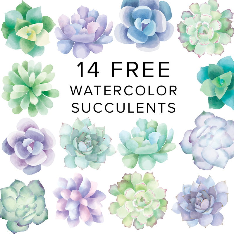 Free_Watercolor_Succulent_Clip_Art.jpg
