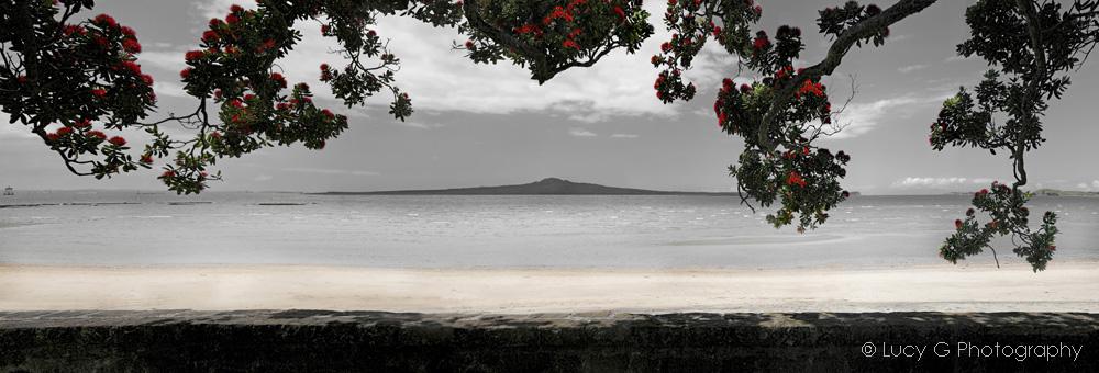kohi paradise.jpg