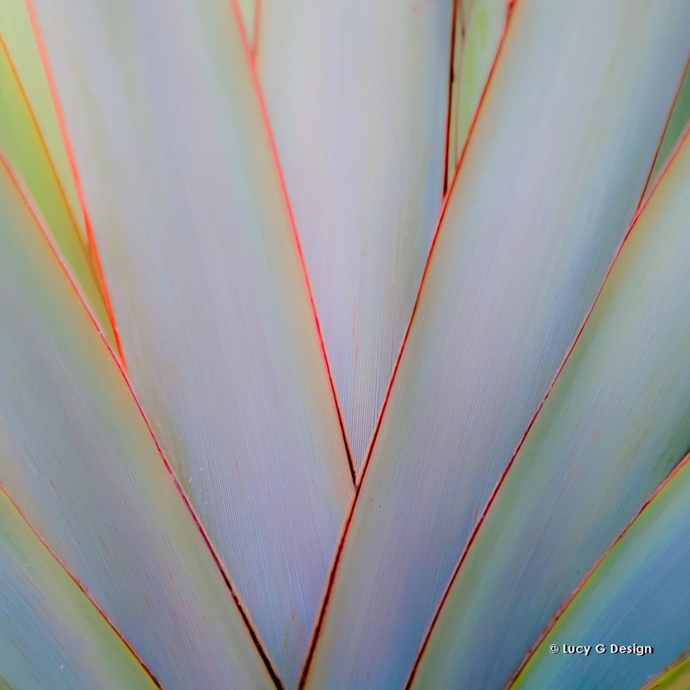 'Closeup flax' glass wall art 51x51cm