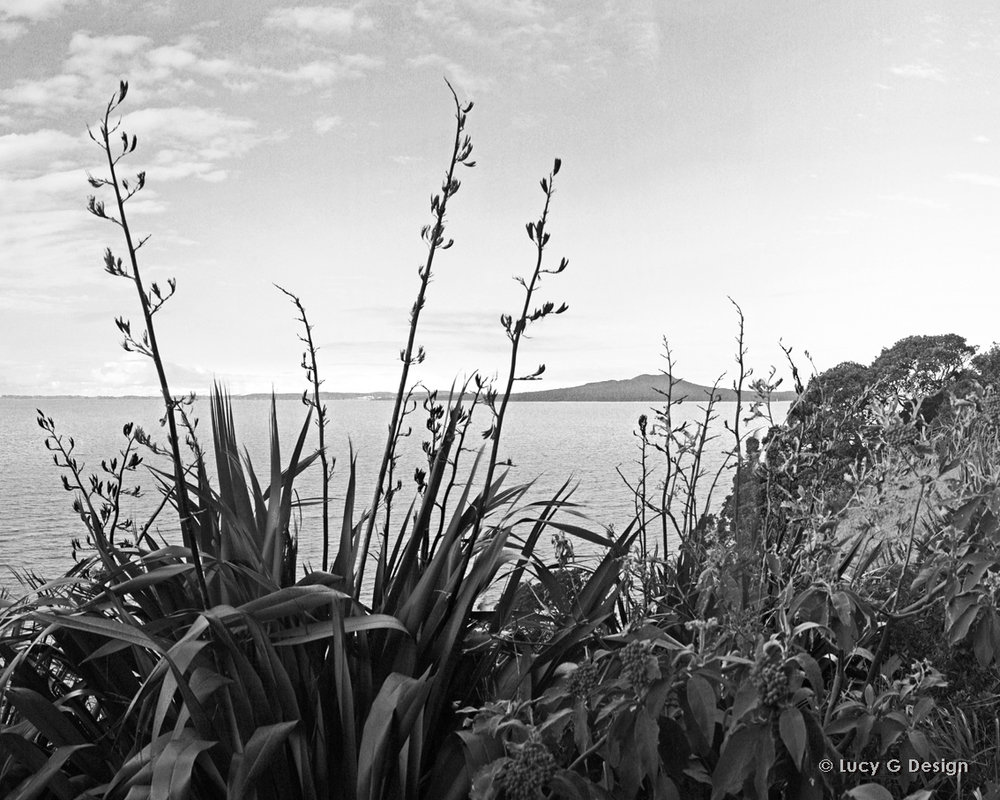 'Rangitoto' b/w 60x75cm glass wall art