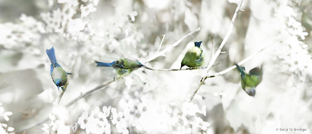 'Bellbirds' 51x102cm glass wall art