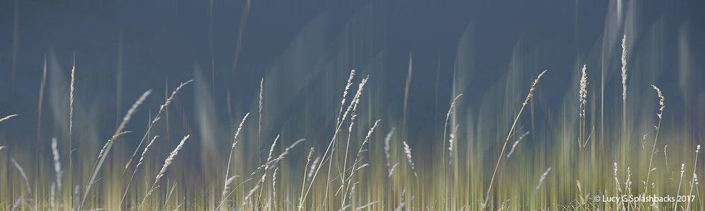 COLBLUR-5 Summer Haze