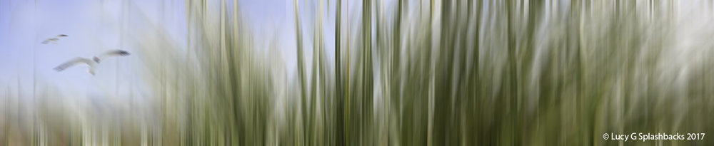 COLBLUR-2   Beach Grasses