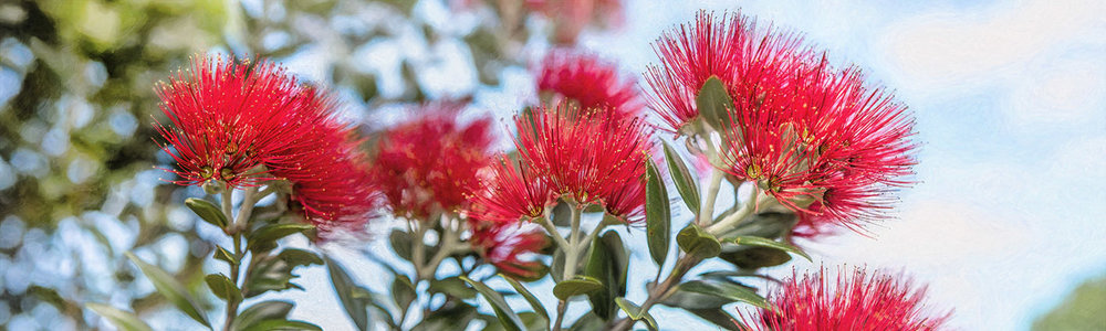 NAT 2016-1 Pohutukawa A (painted) 2500x750mm low res proof.jpg