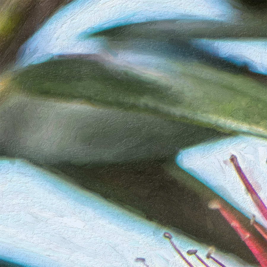 pohutukawa painted printed image on glass splashback lucy g detail d.jpg