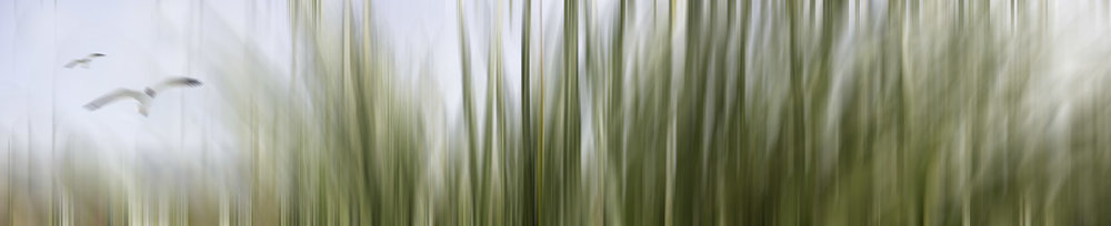 'BEACH GRASSES' printed image on glass splashback