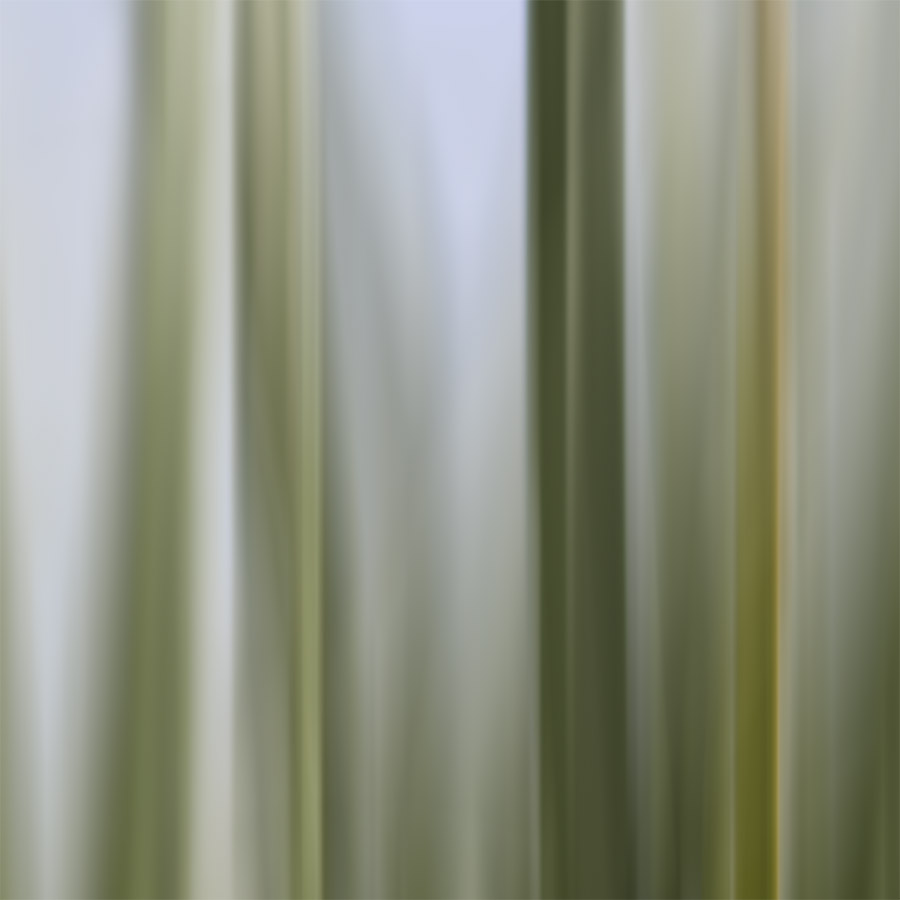 'BEACH GRASSES' printed image on glass splashback -  artwork detail