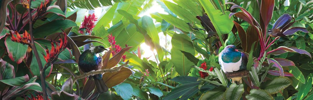 NAT2019-5 Tropical Paradise