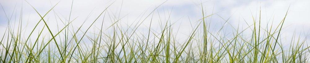 NAT 2019-3 Grass