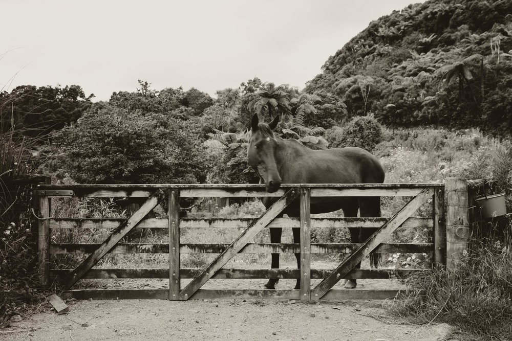 A local residents horse at the top of Mountain road near the entrance of the hike.