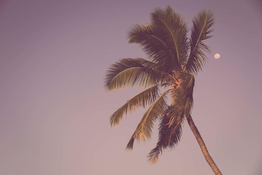 Fiji-33.jpg