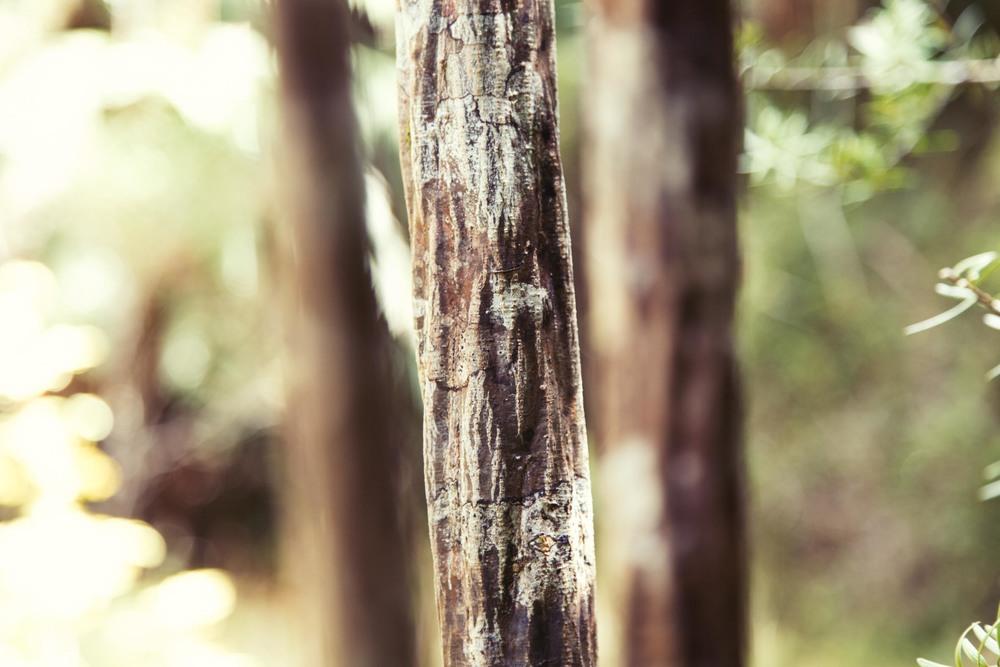 Hike-76.jpg