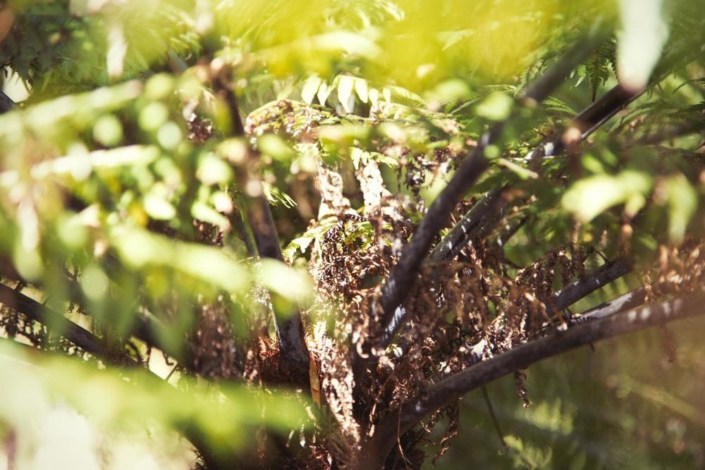 Hike-95.jpg