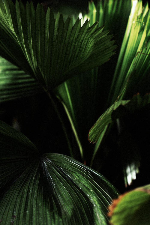Tropics (3 of 53).jpg