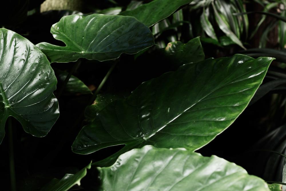 Tropics (19 of 53).jpg