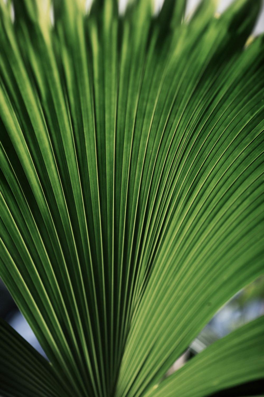 Tropics (35 of 53).jpg