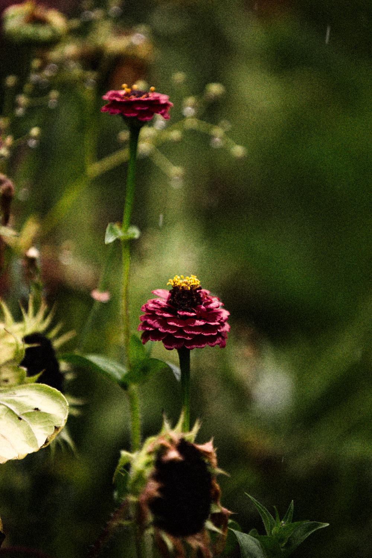 FLOWERS | N RAMSEY (3 of 56).jpg