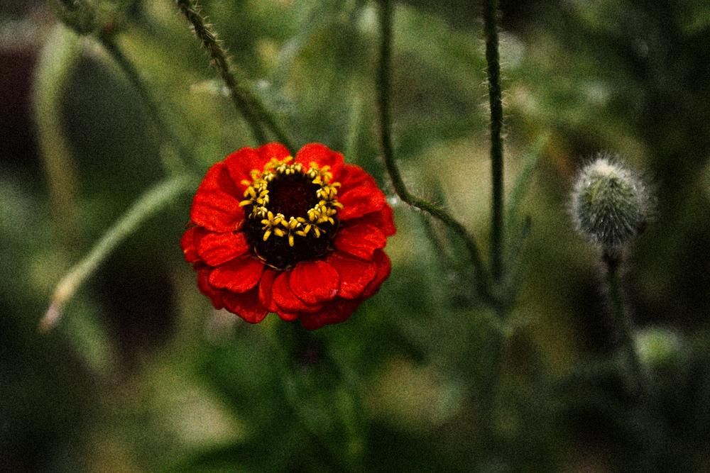 FLOWERS | N RAMSEY (4 of 56).jpg