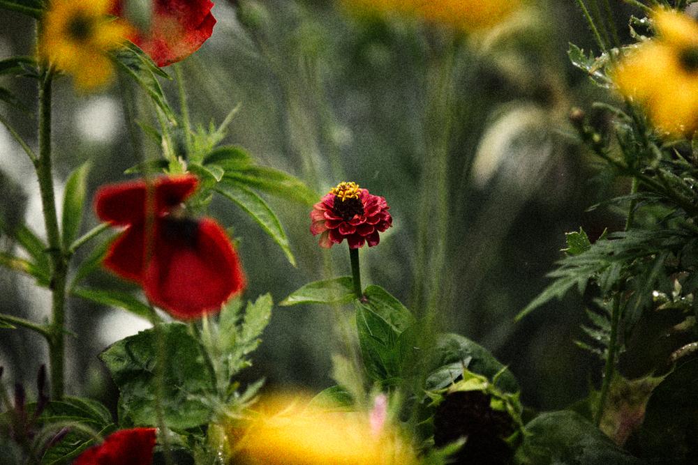 FLOWERS | N RAMSEY (5 of 56).jpg