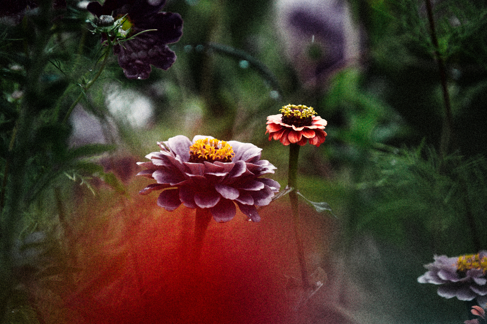 FLOWERS | N RAMSEY (6 of 56).jpg