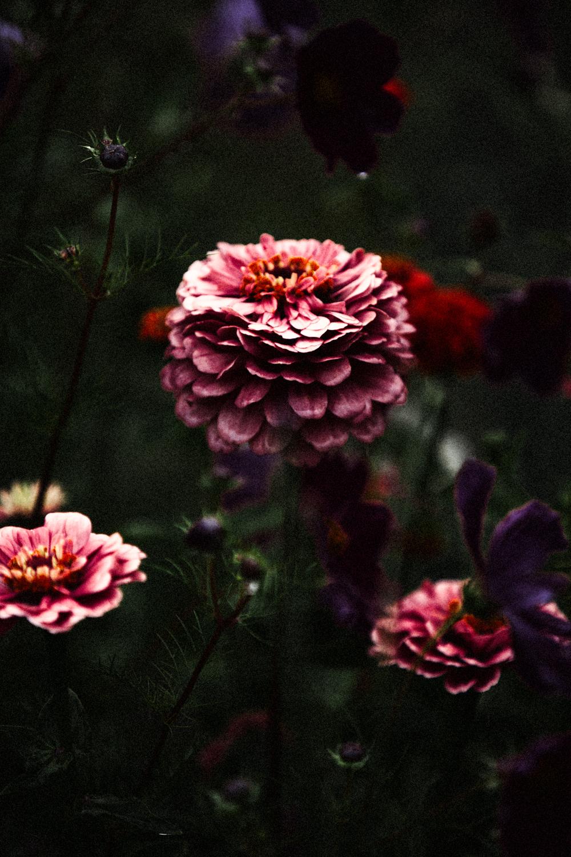 FLOWERS | N RAMSEY (8 of 56).jpg