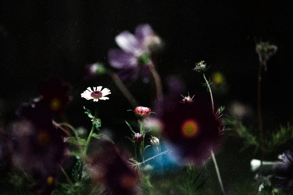 FLOWERS | N RAMSEY (10 of 56).jpg