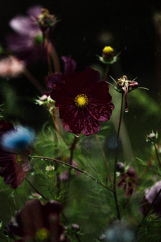 FLOWERS | N RAMSEY (9 of 56).jpg