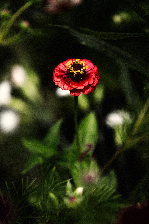 FLOWERS | N RAMSEY (11 of 56).jpg