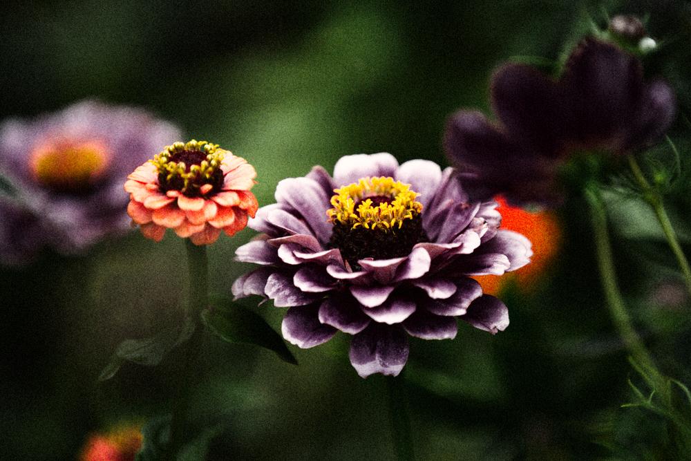 FLOWERS | N RAMSEY (12 of 56).jpg