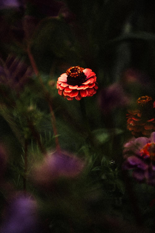 FLOWERS | N RAMSEY (14 of 56).jpg